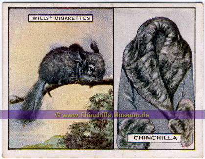 Wills's Cigarettes - Chinchilla